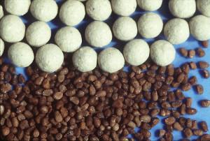 semences-graines-nues-enrobees